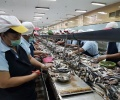 Lingga Jajaki Industri Pengalengan Ikan di Banyuwangi