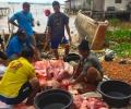 Gara-gara Ikan Duyung Dipotong-potong Warga, BPSPL Lapor Polisi