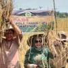 Isdianto Panen Padi di Teluk Radang Kundur