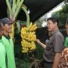 Isdianto Buka Bazar dan Pameran Hasil Pertanian Warga Binaan