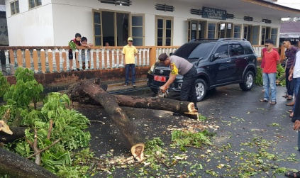 Mobil Dinas Milik Pemprov Kepri Nyaris Tertimpa Pohon