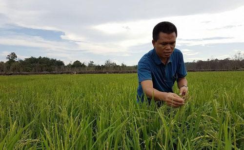 Thailand Intip Pertanian Organik di Lingga